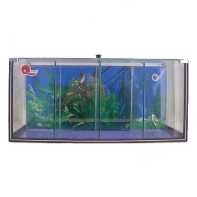 Aquarium betta 4 kammern 23 5 l versandkostenfrei for Kampffisch shop