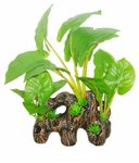 Superfish Easy Pflanze-Holz mit Anubias 16cm